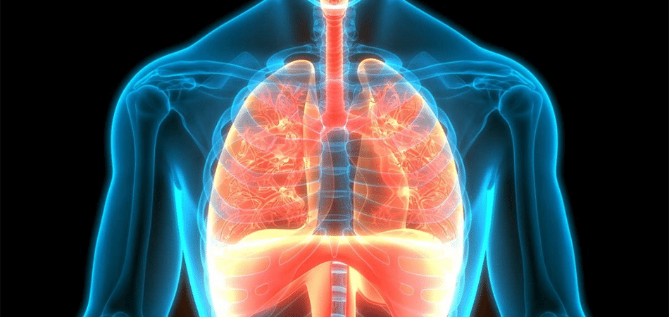 Does Asthma Affect Bronchi Or Bronchioles